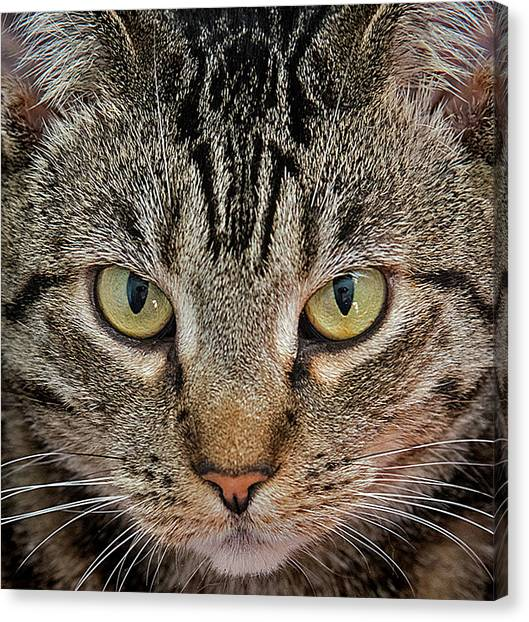 Canvas Print - Look Into My Eyes by Murray Bloom