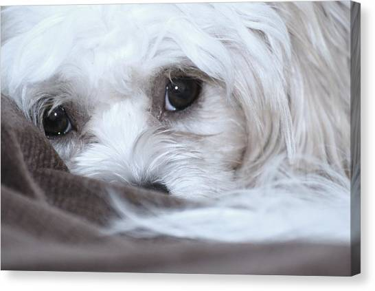 Look Into My Soul Canvas Print