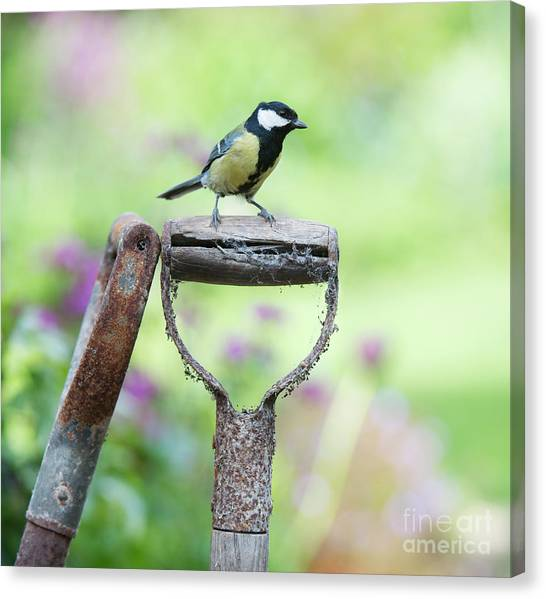 Titmice Canvas Print - Look Out by Tim Gainey