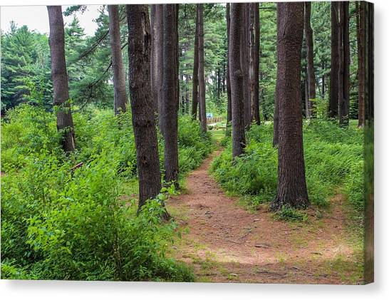 Look Park Nature Path Canvas Print