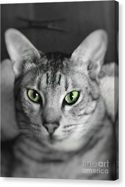 Ocicats Canvas Print - Lookin' Atcha by Jenny Revitz Soper