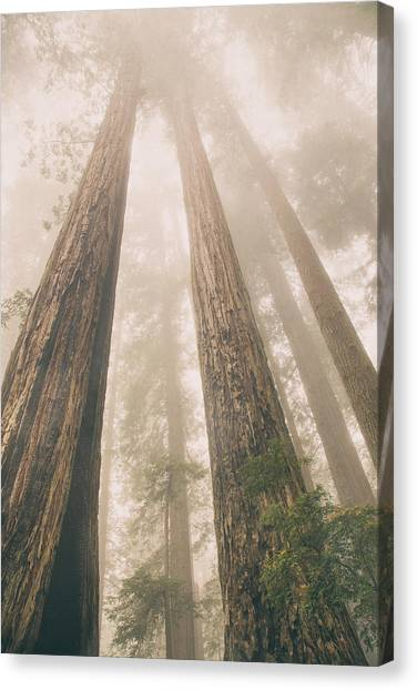 Looking At Giants Canvas Print