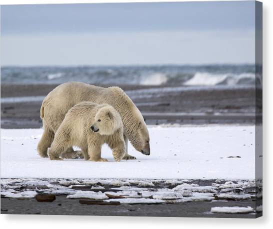 Looking Back In The Arctic Canvas Print