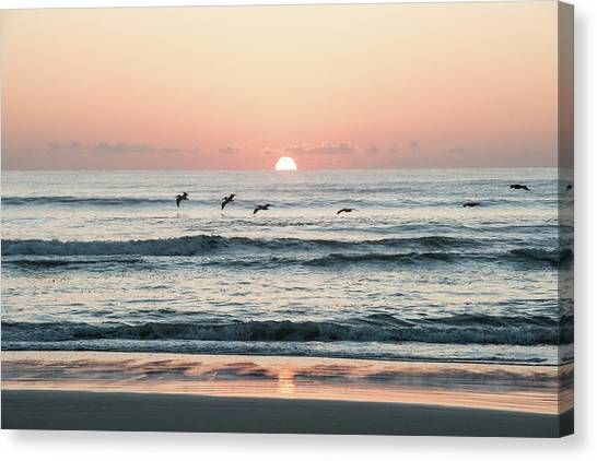 Looking For Breakfest Canvas Print