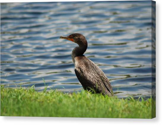 Looking For Food Canvas Print by Clay Peters Photography