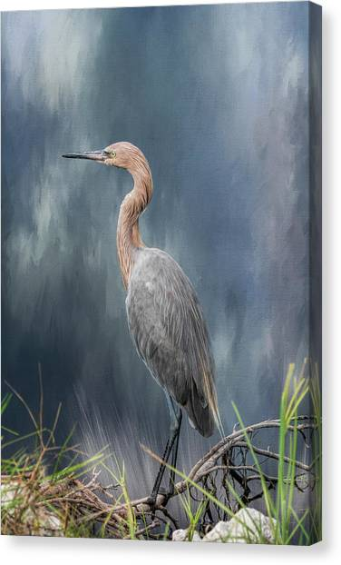 Canvas Print featuring the photograph Looking For Food by Kim Hojnacki