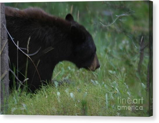 Looking For Lunch Canvas Print by Robert Torkomian