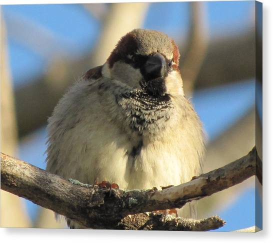 Looking Over The Nest Canvas Print by Lisa Jayne Konopka