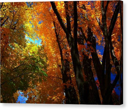 Looking Up 5 Canvas Print by Larry Ney  II