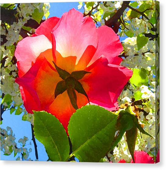 Looking Up At Rose And Tree Canvas Print