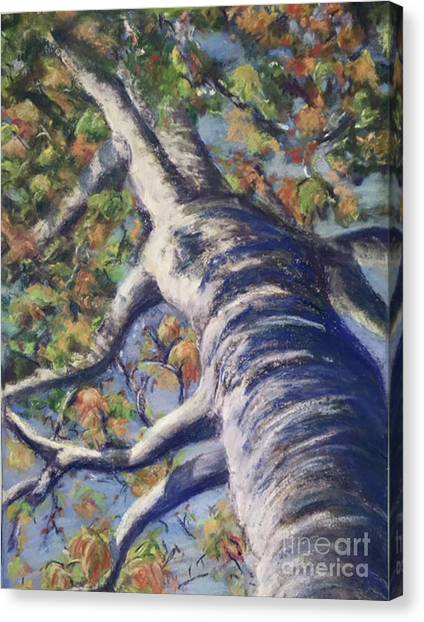 Looking Up - Fall Canvas Print
