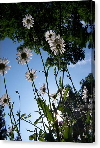 Looking Up Canvas Print by Ken Day