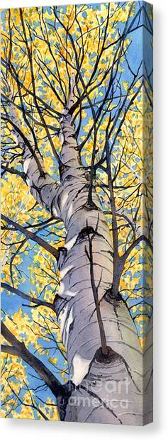 Looking Up Canvas Print by Lorraine Watry