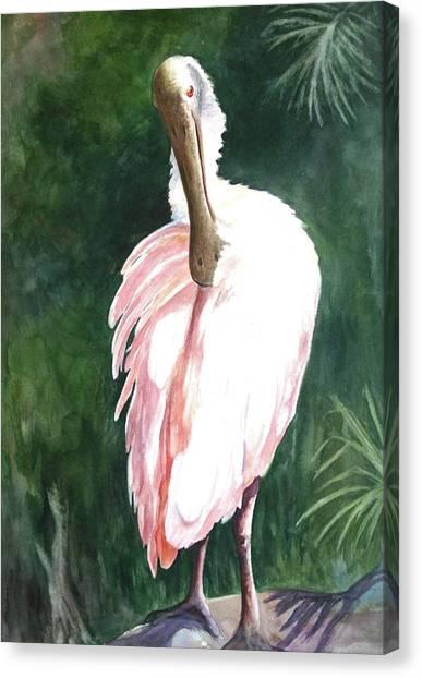 Look'n Back - Spoonbill Canvas Print