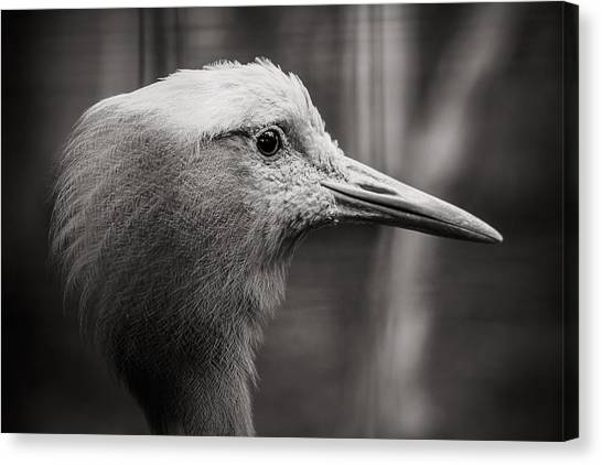 Lookout Canvas Print by Angela Aird