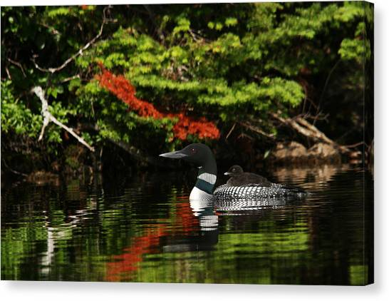 Loon And Chick Canvas Print
