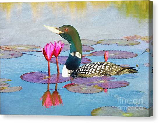 Loons Canvas Print - Loon And Lotus by Laura D Young