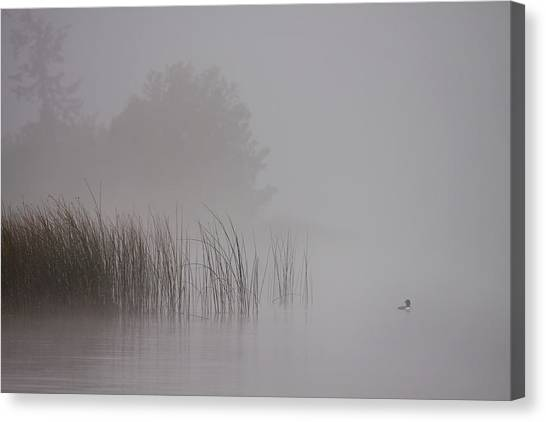 Loons Canvas Print - Loon In Morning Fog by Naman Imagery