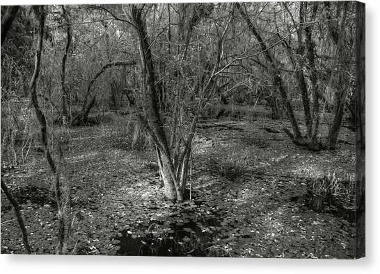 Loop Road Swamp #3 Canvas Print