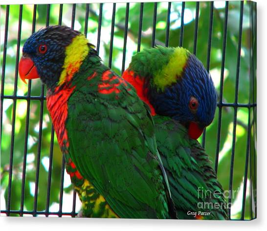 Lory Canvas Print by Greg Patzer