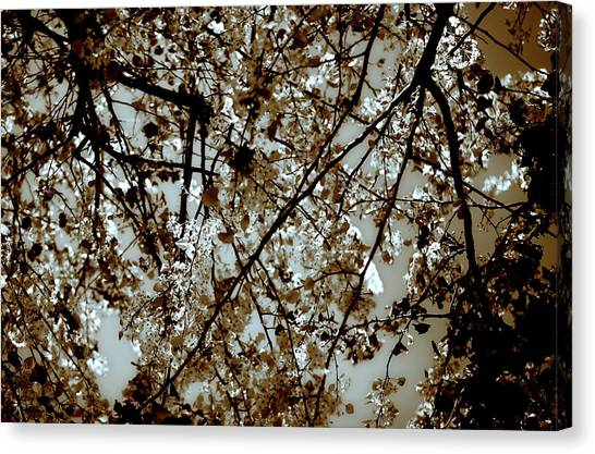 Canvas Print featuring the photograph Branch Two by Lucian Capellaro