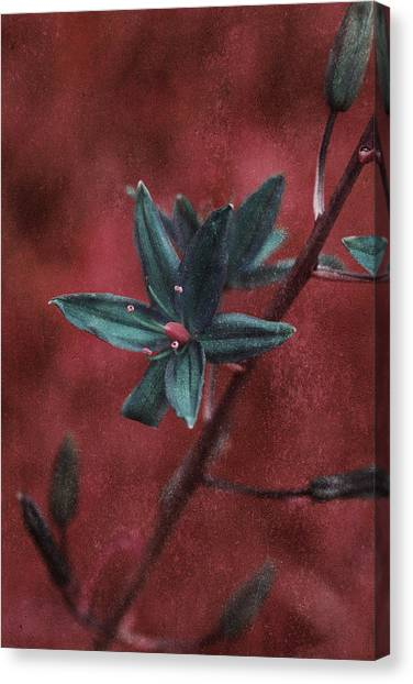 Lost Among Weeds Canvas Print