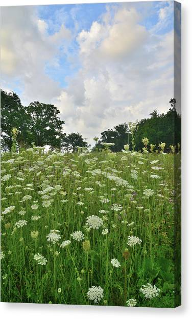 Prairie Sunrises Canvas Print - Lost  Valley Field Of Flowers by Ray Mathis