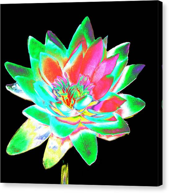 Lotus 4 Canvas Print