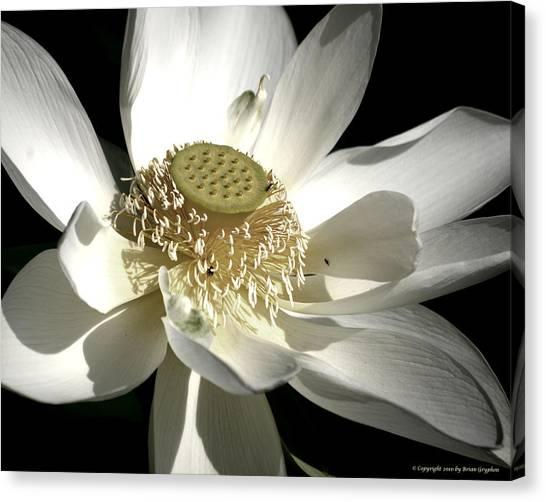 Lotus 8514ds Canvas Print