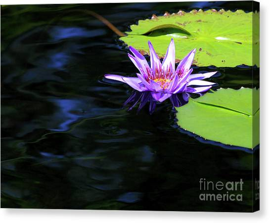 Lotus And Dark Water Refection Canvas Print