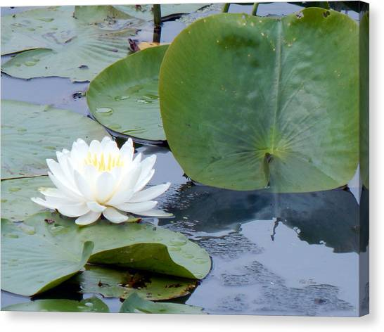 Lily And Leaf Canvas Print