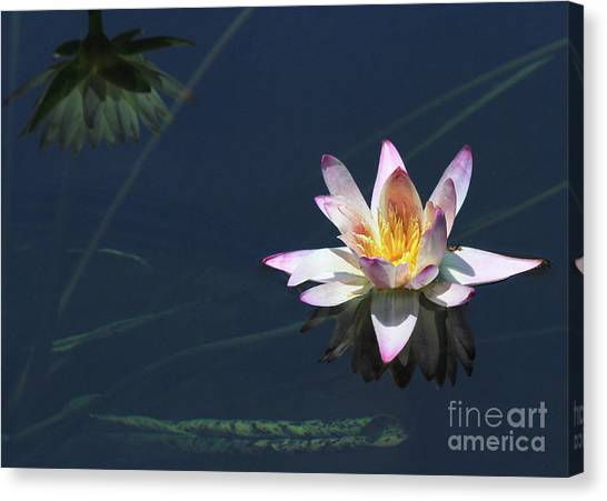 Lotus And Reflection Canvas Print