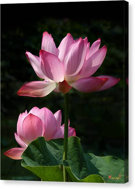 Lotus Beauties--upstaged Dl048 Canvas Print
