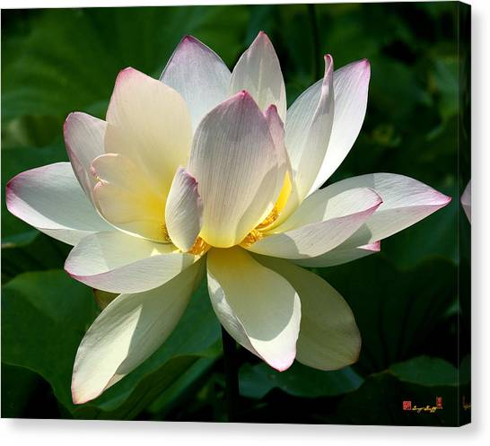 Lotus Beauty--disheveled Dl061 Canvas Print