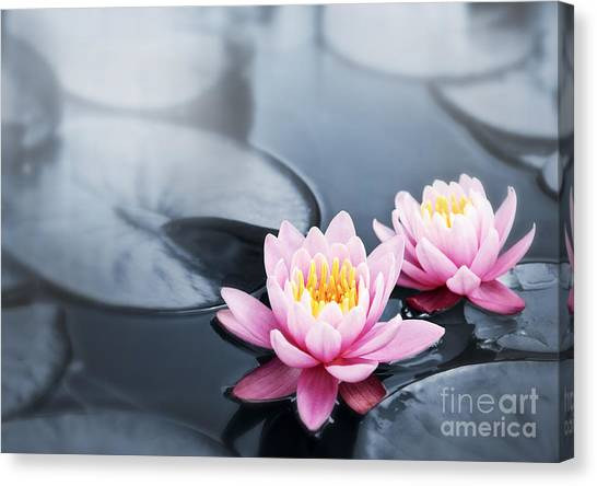 Lily Pond Canvas Print - Lotus Blossoms by Elena Elisseeva