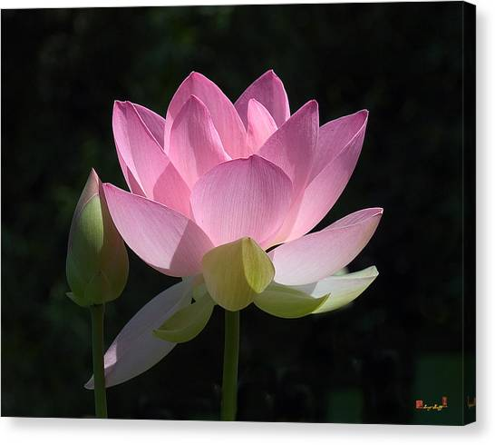 Lotus Bud--snuggle Bud Dl005 Canvas Print