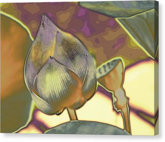Lotus Dreaming 5 Canvas Print