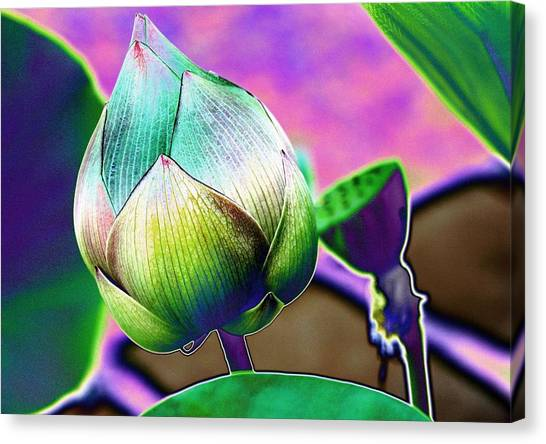 Lotus Dreaming 8 Canvas Print