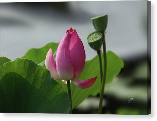Lotus Flower In Pure Magenta Canvas Print