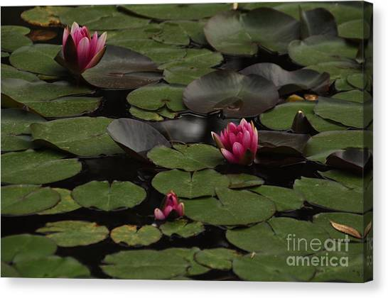 Lotus II Canvas Print