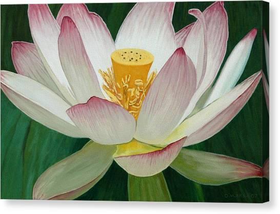 Lotus Of Awakening Canvas Print by Allan OMarra