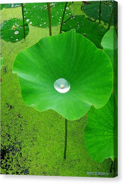 Lotus Pond Canvas Print by Garth Glazier