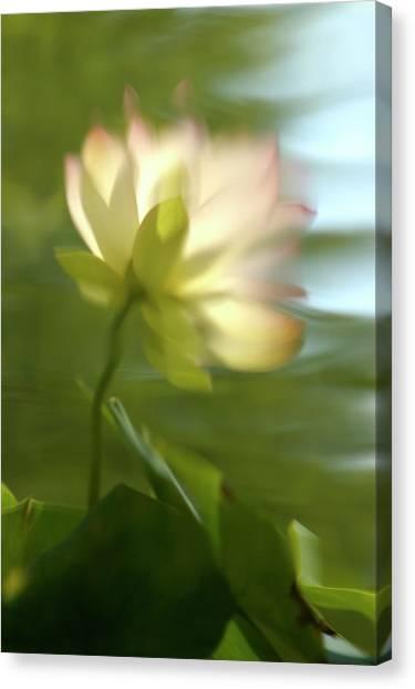 Lotus Reflection Canvas Print