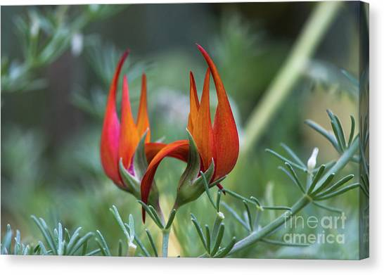 Canvas Print featuring the photograph Lotus Vine Flower by Michael Moriarty