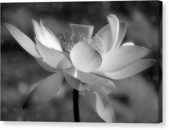 Black and white with color canvas print lotus with bokeh black and white by georgiana
