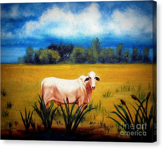 The Lonely Bull Canvas Print