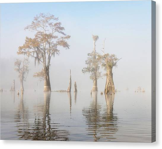 Atchafalaya Basin Canvas Print - Louisiana Cypress Swamp On A Foggy Morning Five by Bill Swindaman
