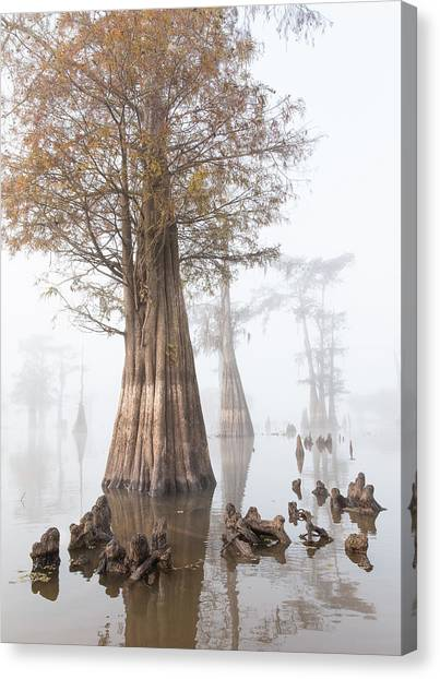 Atchafalaya Basin Canvas Print - Louisiana Cypress Swamp On A Foggy Morning Four by Bill Swindaman
