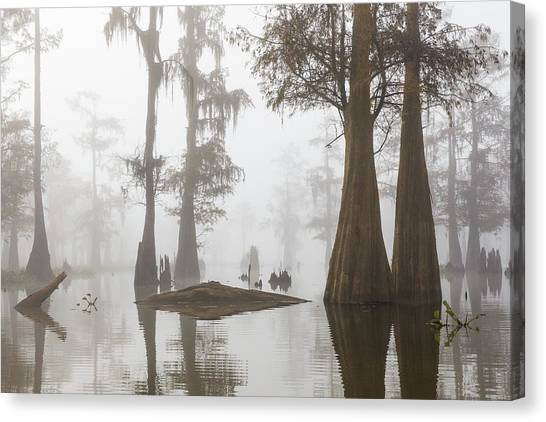 Atchafalaya Basin Canvas Print - Louisiana Cypress Swamp On A Foggy Morning Three by Bill Swindaman