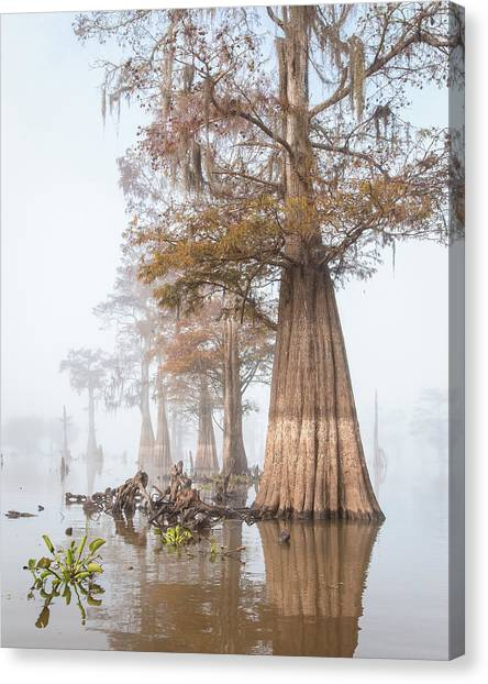 Atchafalaya Basin Canvas Print - Louisiana Cypress Swmp On A Foggy Morning Two by Bill Swindaman